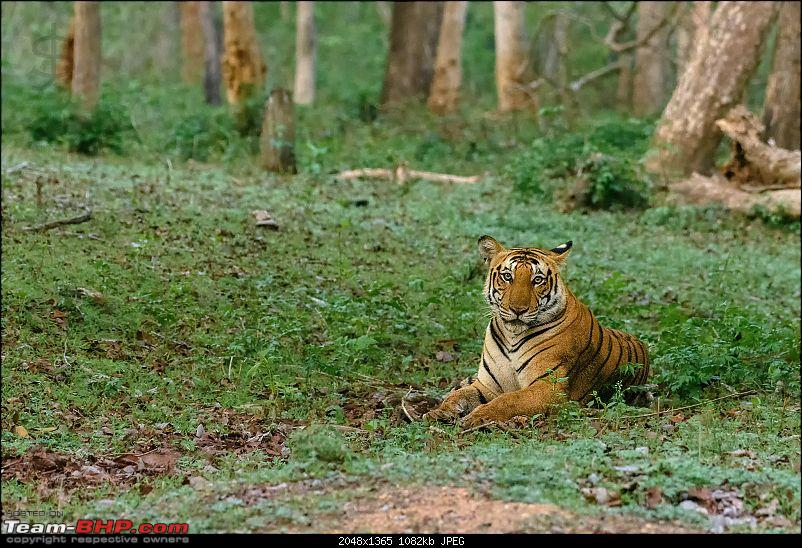 Kabini - The call of the wild-kbnmay18329.jpg