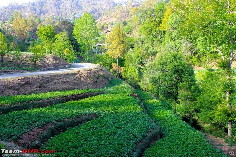 To the last village of India - Mana, Uttarakhand. Chronicles of a Lone Biker-img_4502.jpg