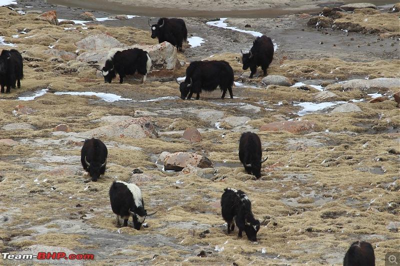 Ladakh: Four Idiots & One XUV500-271.jpg