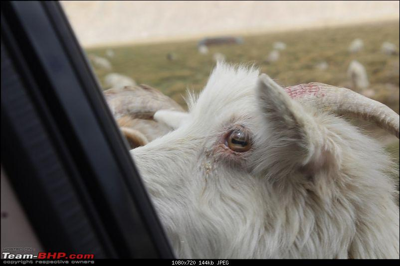 Ladakh: Four Idiots & One XUV500-298.jpg