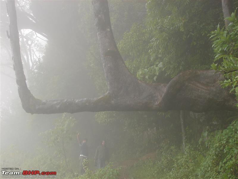 Name:  Chikmagalur 086.JPG