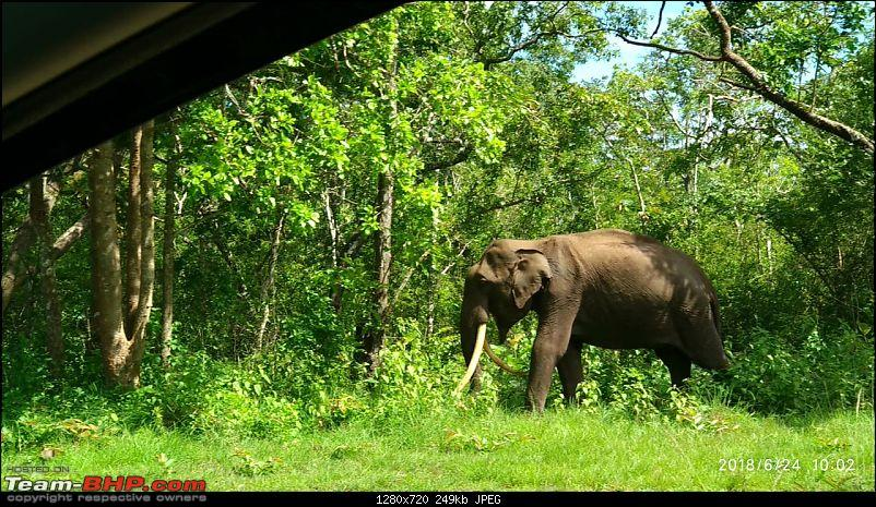 A quick getaway to Kabini dam, Nagarhole and Nugu reservoir-elephant-6.jpg