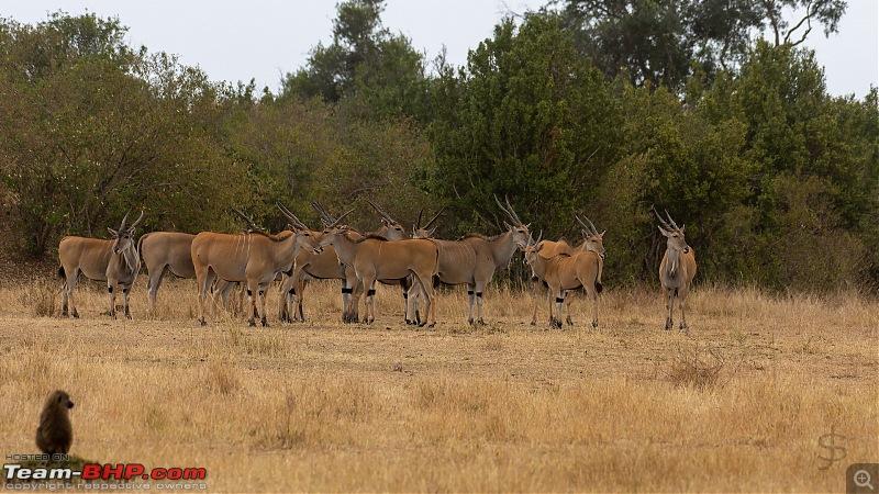 Masai Mara - A magical week in wildlife heaven-tbhp02009-mm4185.jpg