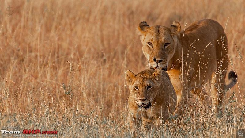 Masai Mara - A magical week in wildlife heaven-tbhp03007-mm4551.jpg