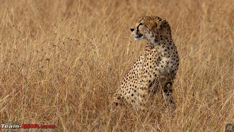 Masai Mara - A magical week in wildlife heaven-tbhp03021-mm4839.jpg