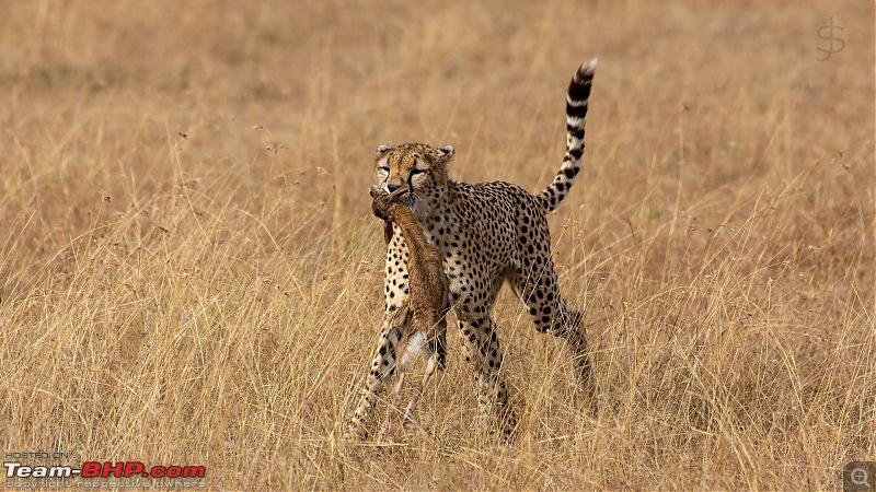 Masai Mara - A magical week in wildlife heaven-tbhp03023-mm4899.jpg