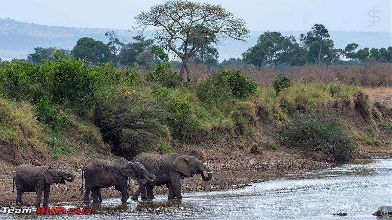 Masai Mara - A magical week in wildlife heaven-tbhp04021-mm5403.jpg