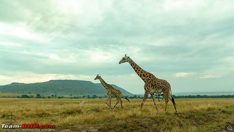 Masai Mara - A magical week in wildlife heaven-tbhp05004-mm5415w.jpg