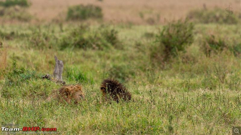 Masai Mara - A magical week in wildlife heaven-tbhp05008-mm5549.jpg