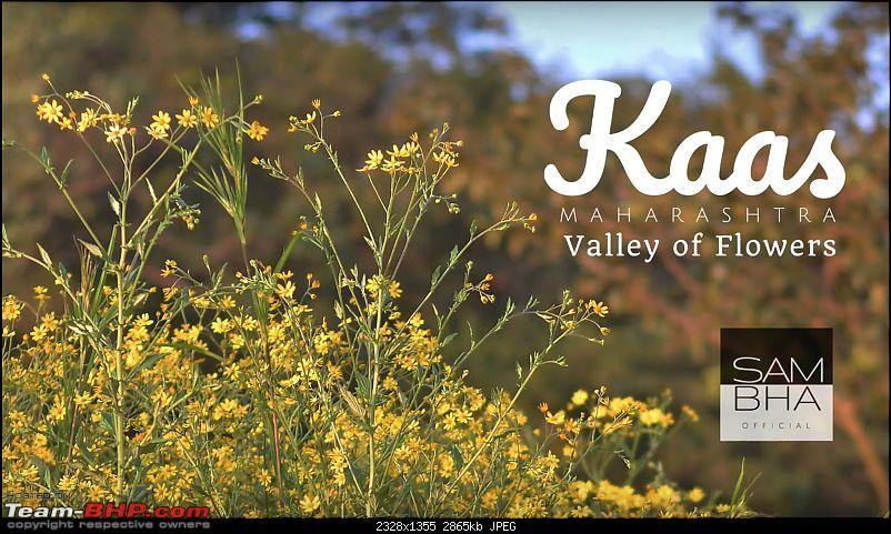 Video Tour | Kaas Plateau : The (Hidden) Valley of Flowers-kaas-vid-1.jpg