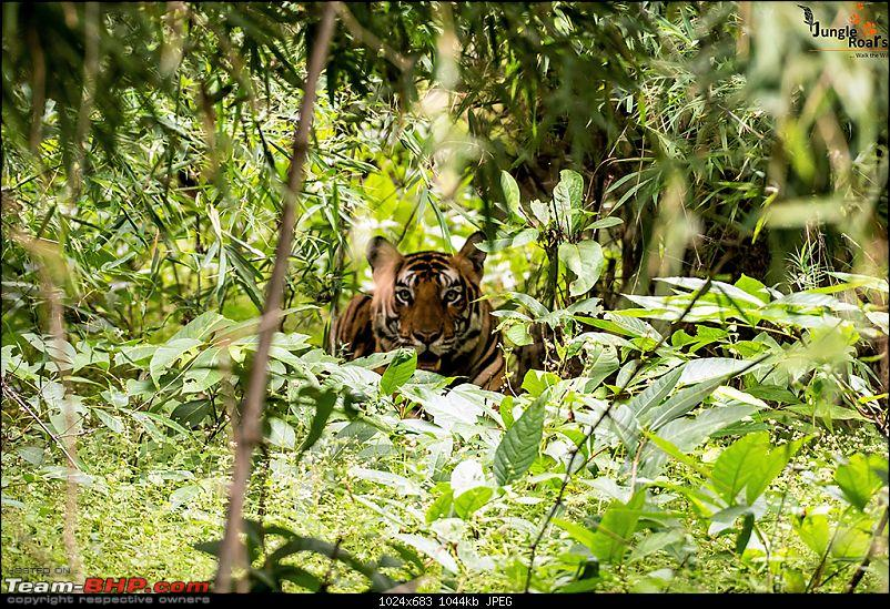 Wandering in the wild : Ahmedabad to Bandhavgarh-_dsc5319.jpg