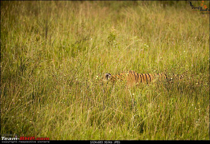 Wandering in the wild : Ahmedabad to Bandhavgarh-_dsc5330.jpg