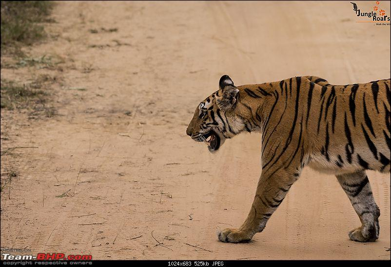 Wandering in the wild : Ahmedabad to Bandhavgarh-_dsc5352.jpg