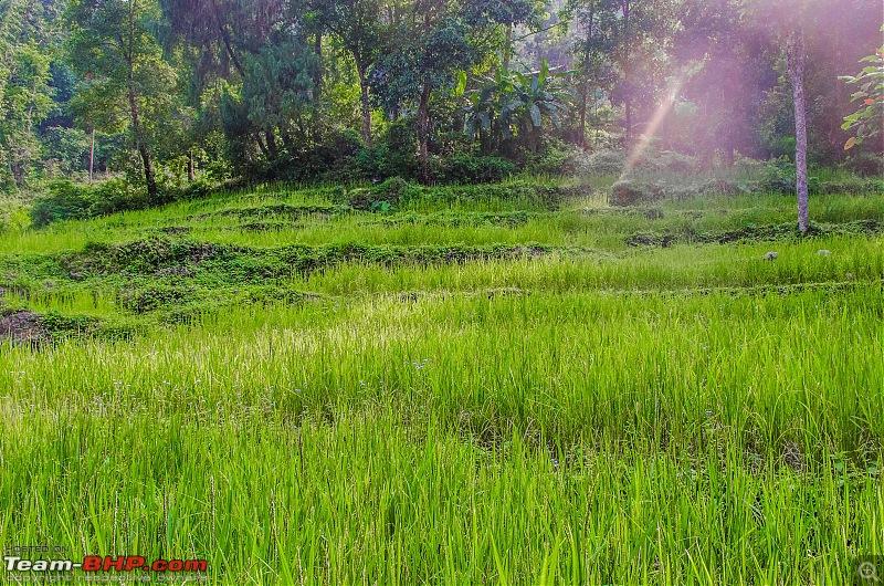 Durga Puja drive to Kalimpong & Chamong, WB-_dsc7407.jpg