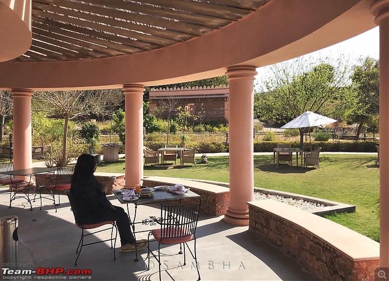 Video Tour | Tree of Life, Jaipur | Staycation-enlight1076.jpg