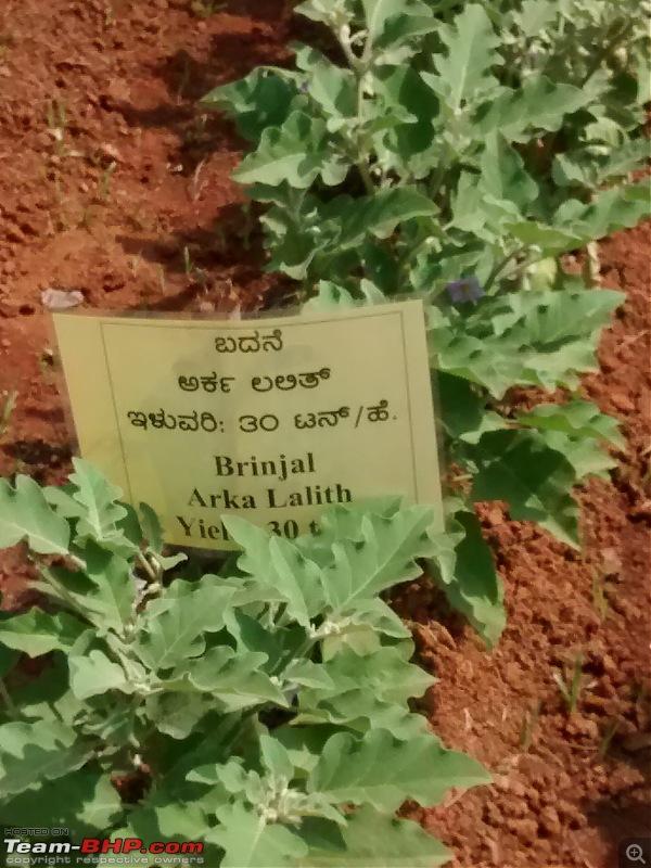 Pics: Krishi Mela in Bengaluru, 2018-img_20181117_110046643.jpg