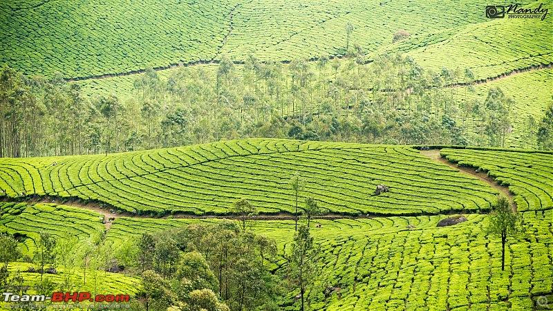 Weekend drive to Munnar & Kotagiri! Mesmerizingly & bewitchingly beautiful-dsc_4394.jpg