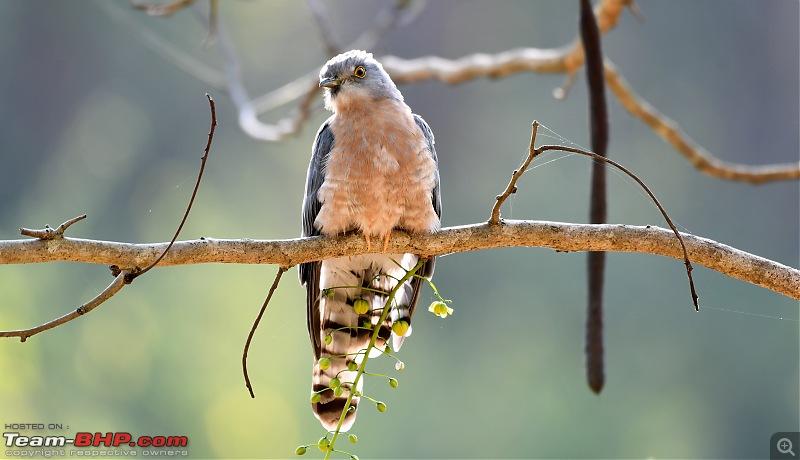 Trip to Birders Heaven - Costa Rica-dsc_3505.jpg