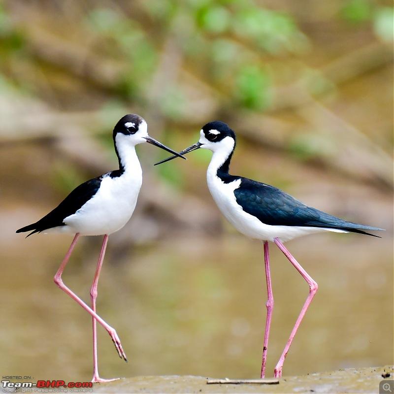 Trip to Birders Heaven - Costa Rica-_dsc5719.jpg