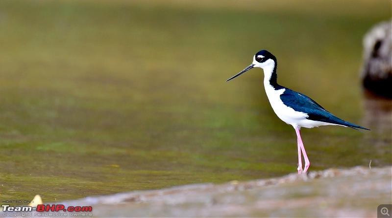 Trip to Birders Heaven - Costa Rica-_dsc5767.jpg