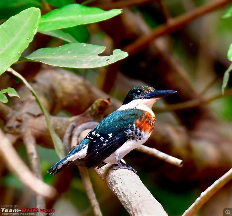 Trip to Birders Heaven - Costa Rica-_dsc5840.jpg