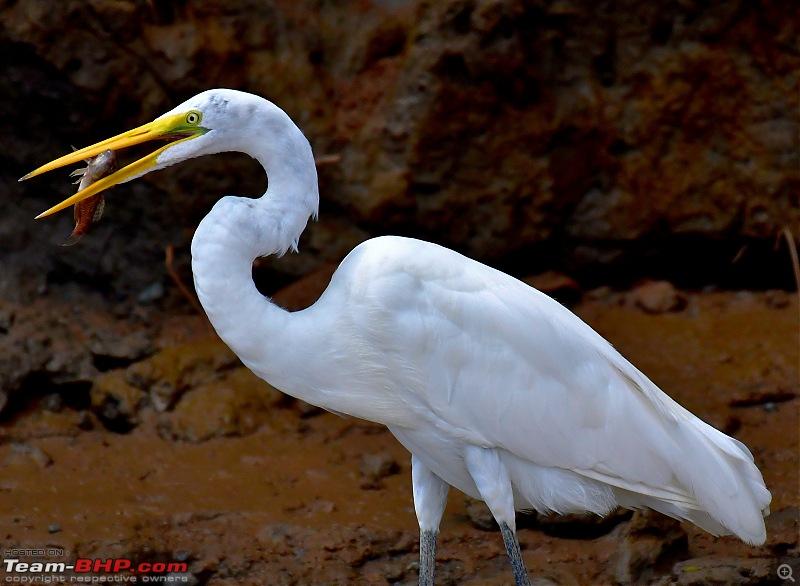 Trip to Birders Heaven - Costa Rica-_dsc6034.jpg