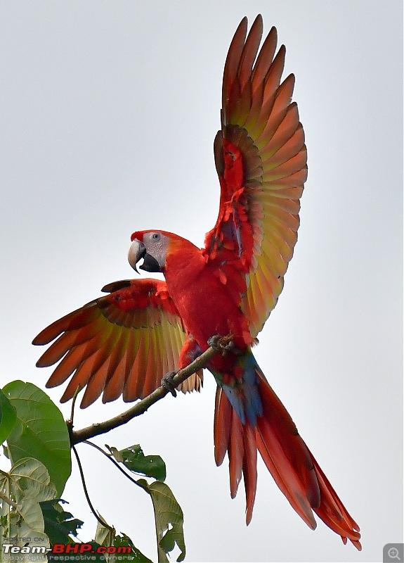 Trip to Birders Heaven - Costa Rica-_dsc6550.jpg