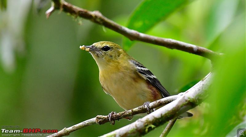 Trip to Birders Heaven - Costa Rica-_dsc7113.jpg