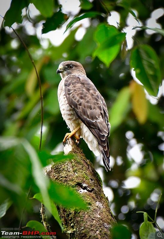 Trip to Birders Heaven - Costa Rica-_dsc7576.jpg