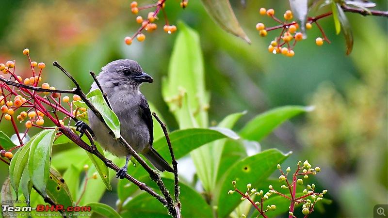 Trip to Birders Heaven - Costa Rica-_dsc7704.jpg