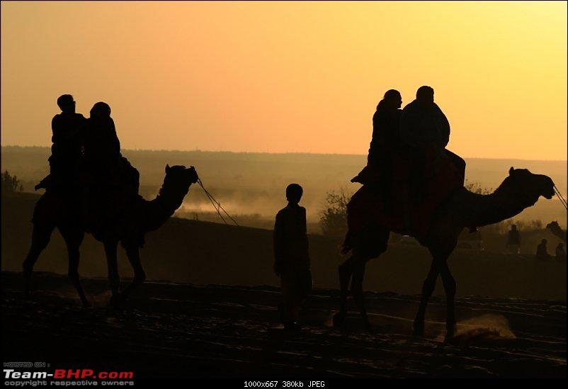 Forts, Birds and Tigers : A 4500 km 18 day road-trip to Rajasthan-_mg_1987.jpg