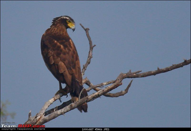 Forts, Birds and Tigers : A 4500 km 18 day road-trip to Rajasthan-_mg_3264.jpg