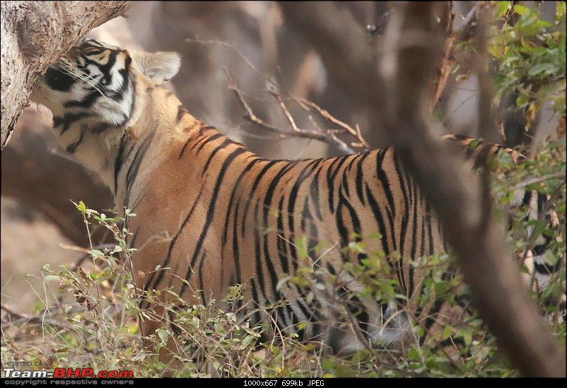 Forts, Birds and Tigers : A 4500 km 18 day road-trip to Rajasthan-_mg_7101.jpg