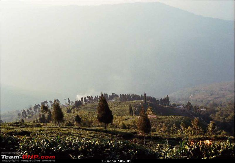 An incredible journey of a lifetime to Bhutan, Kalimpong, Darjeeling and Gangtok!-c-tea-estates.jpg