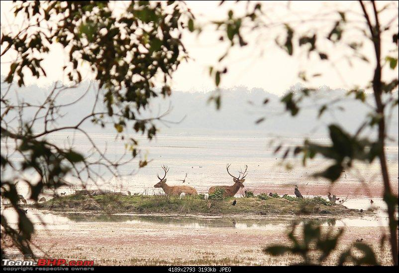 Terai Forests of UP - Dudhwa Tiger Reserve, Kishanpur & Katarniaghat Wildlife Sanctuary-img_4054.jpg
