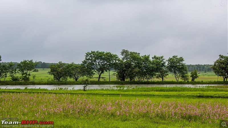 Cross country monsoon drive | Vitara Brezza | 7200 km | 17 days-img_54972.jpg