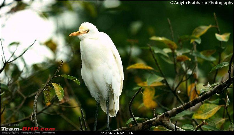 A day out @ Ranganathittu Bird Sanctuary-14.jpg