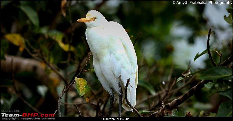 A day out @ Ranganathittu Bird Sanctuary-23.jpg