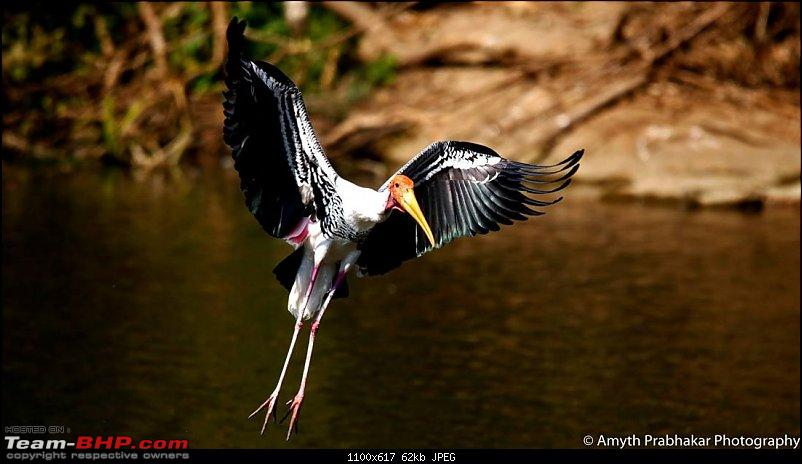 A day out @ Ranganathittu Bird Sanctuary-18.jpg