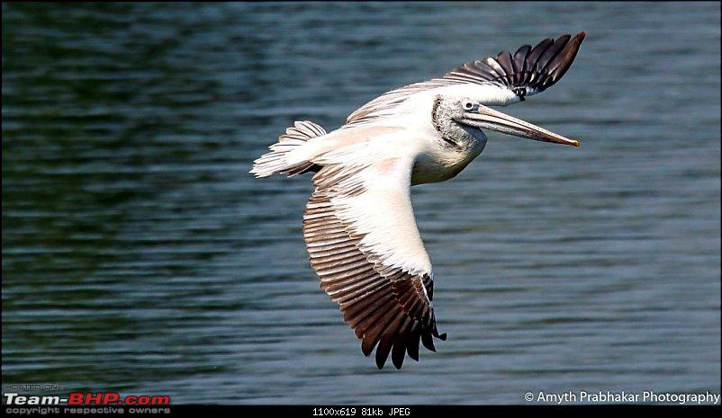 A day out @ Ranganathittu Bird Sanctuary-45.jpg