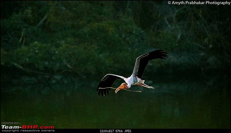 A day out @ Ranganathittu Bird Sanctuary-60.jpg