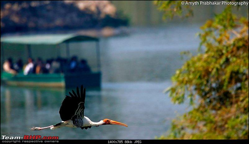 A day out @ Ranganathittu Bird Sanctuary-74.jpg