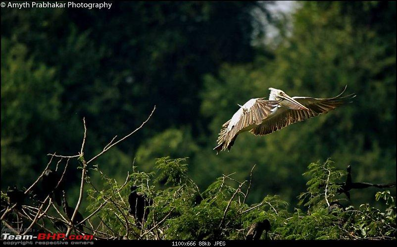 A day out @ Ranganathittu Bird Sanctuary-88.jpg