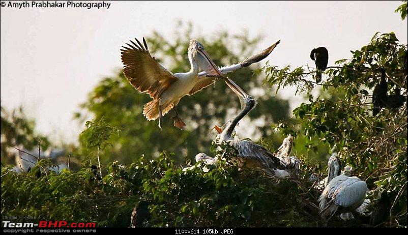 A day out @ Ranganathittu Bird Sanctuary-97.jpg