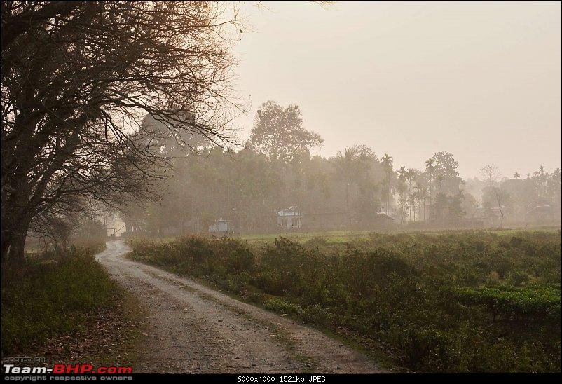 Ciazzler® Roadtrip | 4700 km, a wedding (Kolkata) and forests (Jaldapara & Gorumara)-northbengal_90k2000.jpg