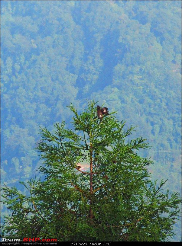 Road-trip to the serene yet majestic Borong (South Sikkim)-img_0697.jpg