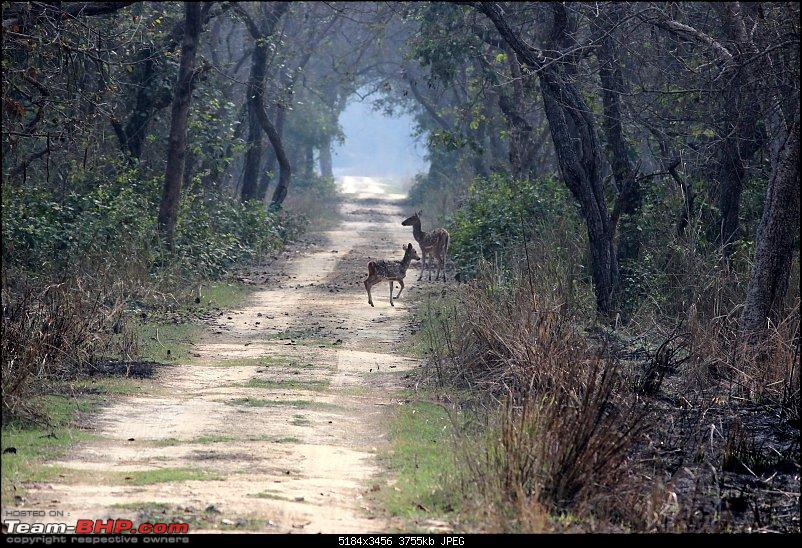 Into the Wild – Road trip to Dudhwa National Park & Tiger Reserve-compress-20-copy.jpg