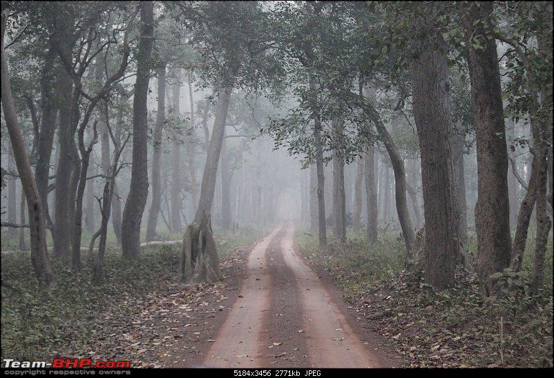 Into the Wild – Road trip to Dudhwa National Park & Tiger Reserve-compress-21-copy.jpg