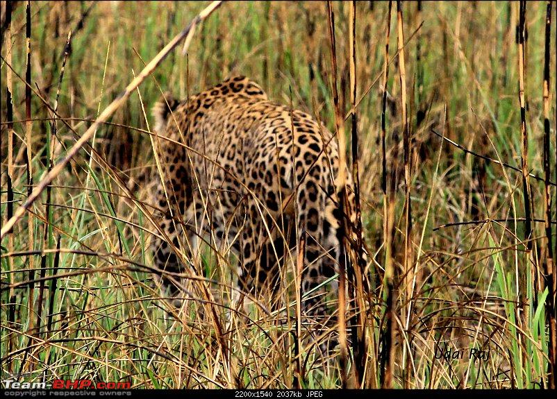Into the Wild – Road trip to Dudhwa National Park & Tiger Reserve-img_9433-copy.jpg