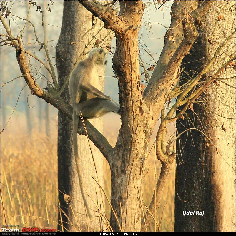 Into the Wild – Road trip to Dudhwa National Park & Tiger Reserve-img_9495-copy.jpg